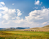 USA, Wyoming, group of people on horseback in vast landscape, Yellowstone National Park