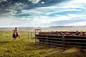 USA, Wyoming, Encampment, a cowboy gets redy to rope calves for branding, Big Creek Ranch