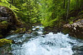 In spring, a rapid mountain stream falling in the Hartelsgraben forest over countless cascades before flowing into the river Enns, Gesaeuse National Park, Ennstal Alps, Styria, Austria