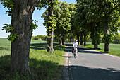 Cyclist passing a chestnut-lined avenue, near Boitzenburg, Uckermark, Brandenburg, Germany