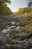 Low water in,Dead wood,Lower Austria,Austria