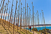Sculpture by the Sea, annual exhibition at the Bondi - Tamarama coastal walk  ´Bamboo´ instalation by Cave Urban  This wind-driven instalation of 222 bamboo ´bird-scarers´ tuned to D-minor began as a reflection on 222 lives lost in the Bali bombings