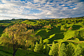 Green hills in rural landscape,  Taihape, Rangitikei District, north island, New Zealand