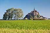 France, Normandy Region, Manche Department, Mont St-Michel, morning