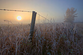 Autumn sunrise over hoar frost-covered barbed wire fence, Alberta prairie