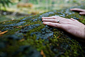 Man's Hand with a Wedding Band Touching a Fallen Mossy Tree, Cathedral Grove, MacMillan Provincial Park, Vancouver Island, British Columbia