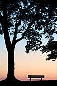 Tree and Bench Silhouette, Niagara-On-the-Lake, Ontario, Canada