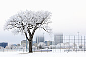 Hoar frost covering trees and baseball diamond in Whittier Park. Downtown skyline in background, Winnipeg, Manitoba