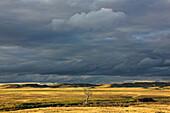 Dead tree at dusk with storm clouds overhead, Grasslands National Park, Saskatchewan