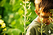 Boy surrounded by green in garden at sunset looking down, Maricourt, Quebec