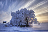Hoar frost covered trees and mailbox, Alberta
