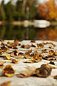 Close up of fall leaves on a dock, Peterborough, Ontario