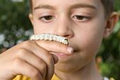 Close up of a little Boy holding silkworm, Laval, Quebec