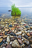 Rocky shoreline of Lake Winnipeg, Hecla Island, Manitoba