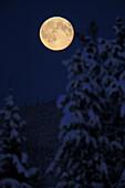 Full moon rising above trees in Watson Lake, Yukon