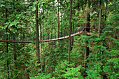 Treetops Adventure walkway at the Capilano Suspension Bridge, Vancouver, British Columbia