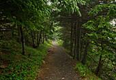 Path leading through the trees, Highlands National Park, Cape Breton, Nova Scotia
