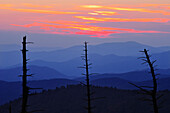 Dead trees and mountains at dusk from Clingmans Dome, Great Smoky Mountains National Park, North Carolina