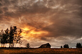 An old abandoned homestead on a hill during a fall sunset north of Bon Accord, Alberta.