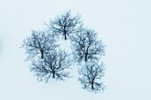 Bare trees in winter snow, toronto ontario canada