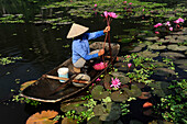 woman in boat holding water lily near Tam Coc, North Vietnam, Vietnam, South East Asia, Asia
