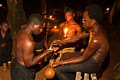 Africa, Gabon, Mboka A Nzambe village, Bwiti ceremonies, Forest, an initiate takes the iboga plant, stimulating, muscular tonic and sometimes in high dose, hallucinogenic