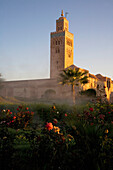 Mist Rising From Rose Gardens By Minaret Of Koutoubia Mosque At Dawn, Marrakesh,Morocco