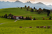 The foothills of the Alps near Steingaden, Upper Bavaria, Bavaria, Germany