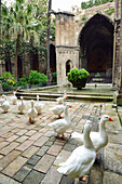 Atrium and cloister of Barcelona cathedral with holy geese, La Catedral de la Santa Creu i Santa Eulalia, Gothic architecture, Barri Gotic, Barcelona, Catalonia, Spain