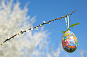 Ostern, Osterei mit Hasenmotiv an blühendem Weißdornstrauch, blauer Himmel und weisse Blüten