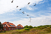 Houses in the dunes with wild geese flying overhead, Branta canadensis, Spiekeroog Island, Nationalpark, North Sea, East Frisian Islands, East Frisia, Lower Saxony, Germany, Europe
