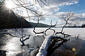 Shore of Lake Werbellinsee in Winter, Joachimsthal, Schorfheide Biosphere Reserve, Uckermark, Brandenburg, Germany