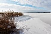 Lake Unterucker in Winter, Prenzlau, Uckermark, Country Brandenburg, Germany