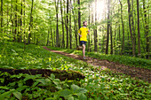 Young man jogging in a beech forest, National Park Hainich, Thuringia, Germany