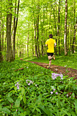Young man jogging in beech forest, National Park Hainich, Thuringia, Germany