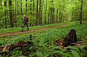 Young woman hiking through a beech forest, National Park Hainich, Thuringia, Germany
