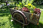 Gartenstillleben von einer Karre mit Pflanzen, Garten, Natur