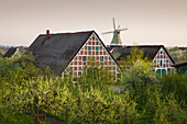 Blossoming trees in front of a windmill and half-timbered houses with thatched roofs, near Twielenfleth, Altes Land, Lower Saxony, Germany
