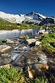 Mountain river flowing out of a lake, Dritte Hornspitze in background, Zillertal Alps, valley Zillertal, Tyrol, Austria