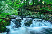 River Selke Fall, Selke Valley, Harz Mountains, Saxony-Anhalt, Germany