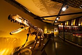 Jurassic Museum of Asturias, Colunga Council, Asturias, Spain, Europe.