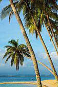 Aguja Island, San Blas archipelago, Kuna Yala Region, Panama, Central America, America
