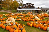 Pumpkins and squash for sale at the Pond Hill Farms along Highway 119 near Harbor Springs, Michigan, USA