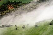 Early morning fog covering agricultural landscapes, Lleida, Spain