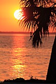 A USA Florida sunset behind the native sabal palm trees and Charlotte Harbor at Port Charlotte on the Gulf Coast