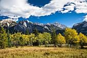 Vast meadows and Colin Range in the Jasper National Park, Alberta, Canada