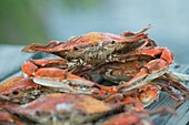 Steamed crabs with Old Bay seasoning on a pier by the shoreline of the Potomac River near the Chesapeake Bay, Virginia USA