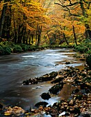 Autumn colours in woodland by the River Teign in Dartmoor, Devon, England