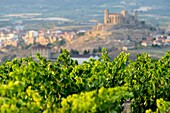 Vineyards of La Rioja with San Vicente de la Sonrierra background, Spain