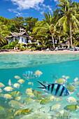 Thailand - underwater sea view of small fish at Ko Samet Island, Thailand, Asia